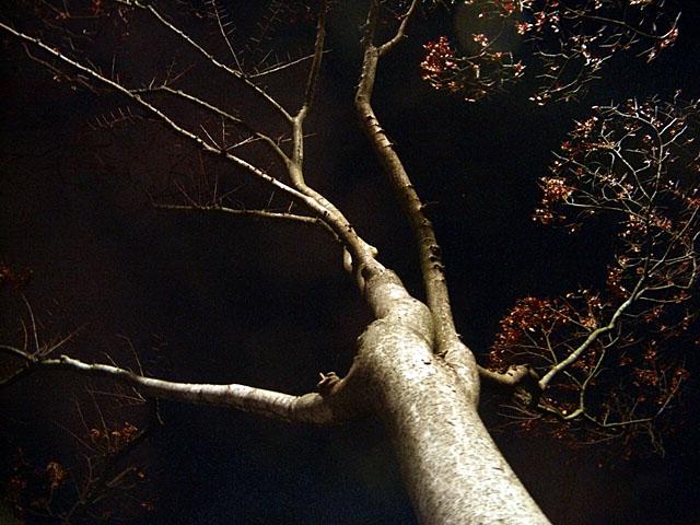 photo051205 / close window
